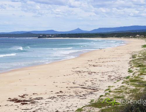portfolio kitebirds kiteschule australien 20
