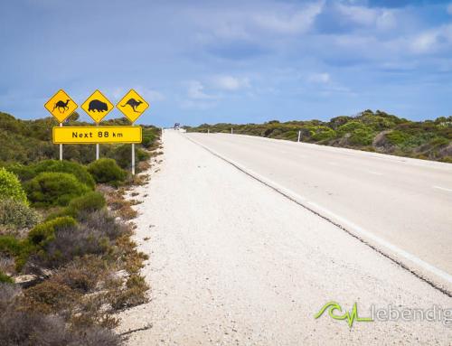 portfolio kitebirds kiteschule australien 16